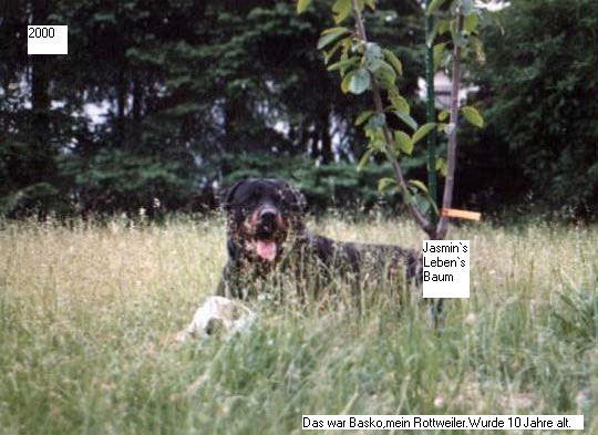 http://fordpflanzen.de/bilder/EricKuntz/BaskosFoto.jpg