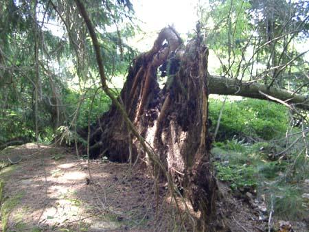 http://fordpflanzen.de/bilder/zottel/2003_FermeFranconi/06150405.jpg